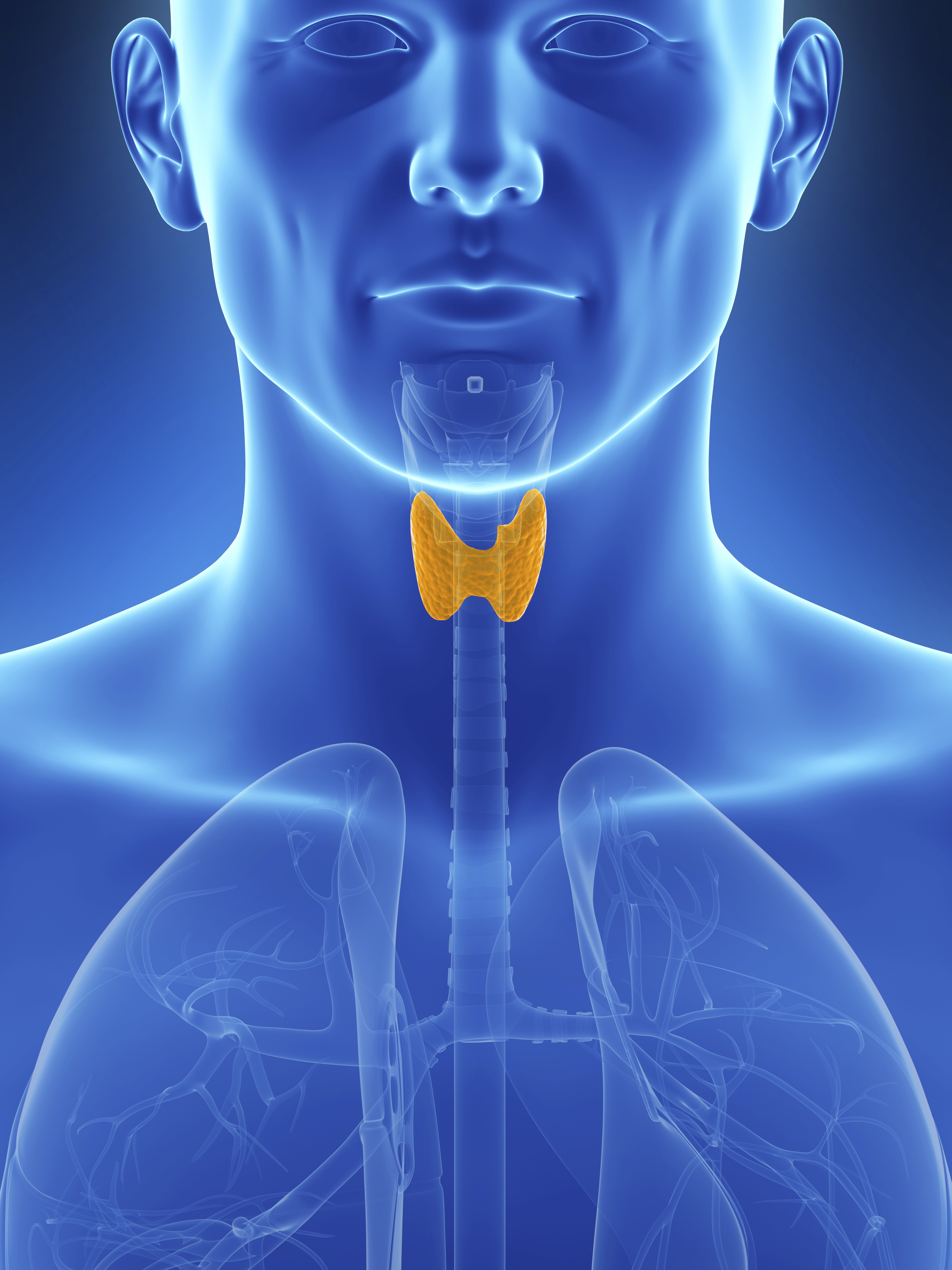 Thyroid picture